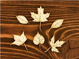 Набор чипбордов Осенние листья